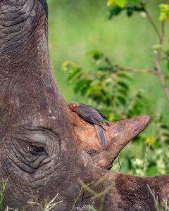 Kruger Magazine Competition, Zali Safaris