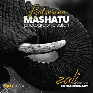 Safaris (2021), Zali Safaris